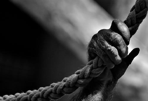 チンパンジー 握力 筋肉 理由