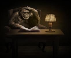 チンパンジー ヒト 記憶